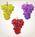 three cluster of grape vector image