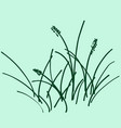 sketch a bunch of grass vector image