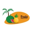Watermelon and pineapple fruit design vector image