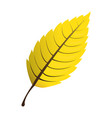 isolated leaf icon vector image