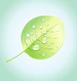 wonderful tree leaf vector image