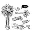 celery hand drawn set vector image