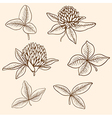 Hand drawn clover flowers vector image vector image