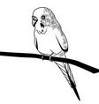 Parrot budgie bird head for t-shirt Sketch tattoo vector image vector image