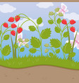 strawberry field green background with ripe vector image