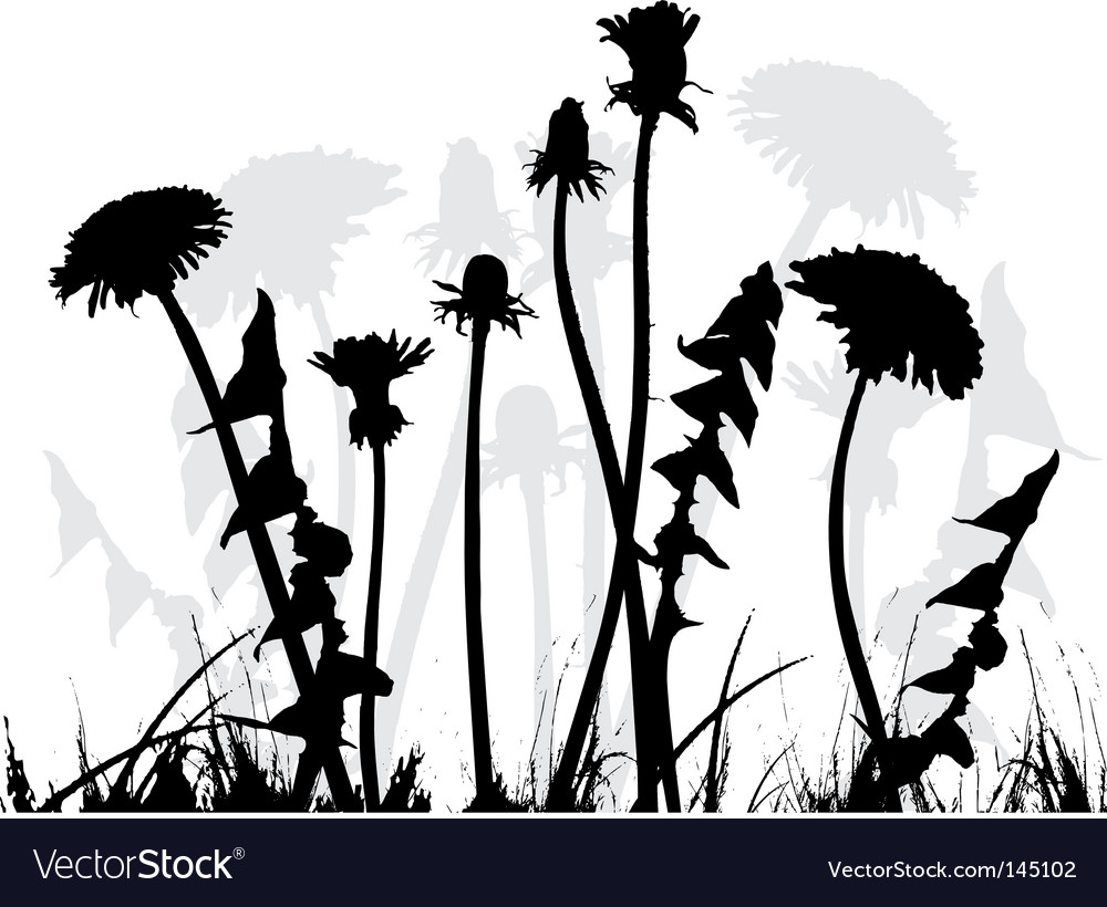 Dandelion collection for designers vector