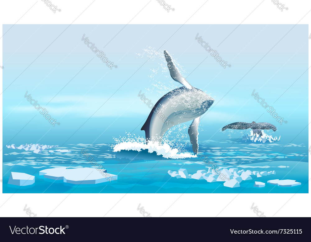 Whales in the northern ocean vector