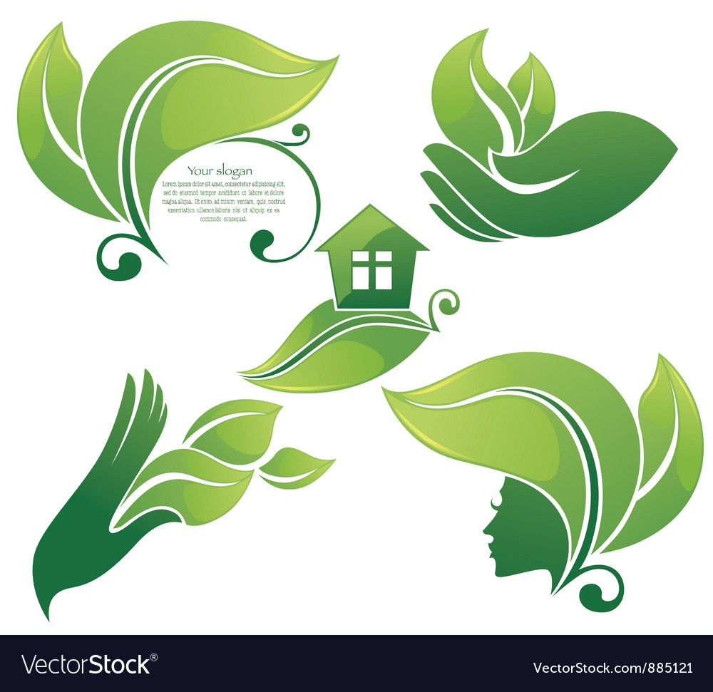 Collection of green leaf images vector
