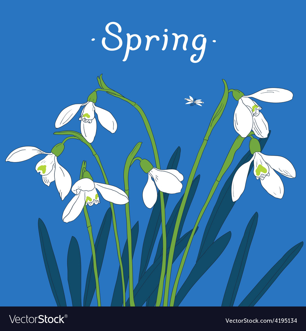 Snowdrops spring bouquet handdrawn card vector
