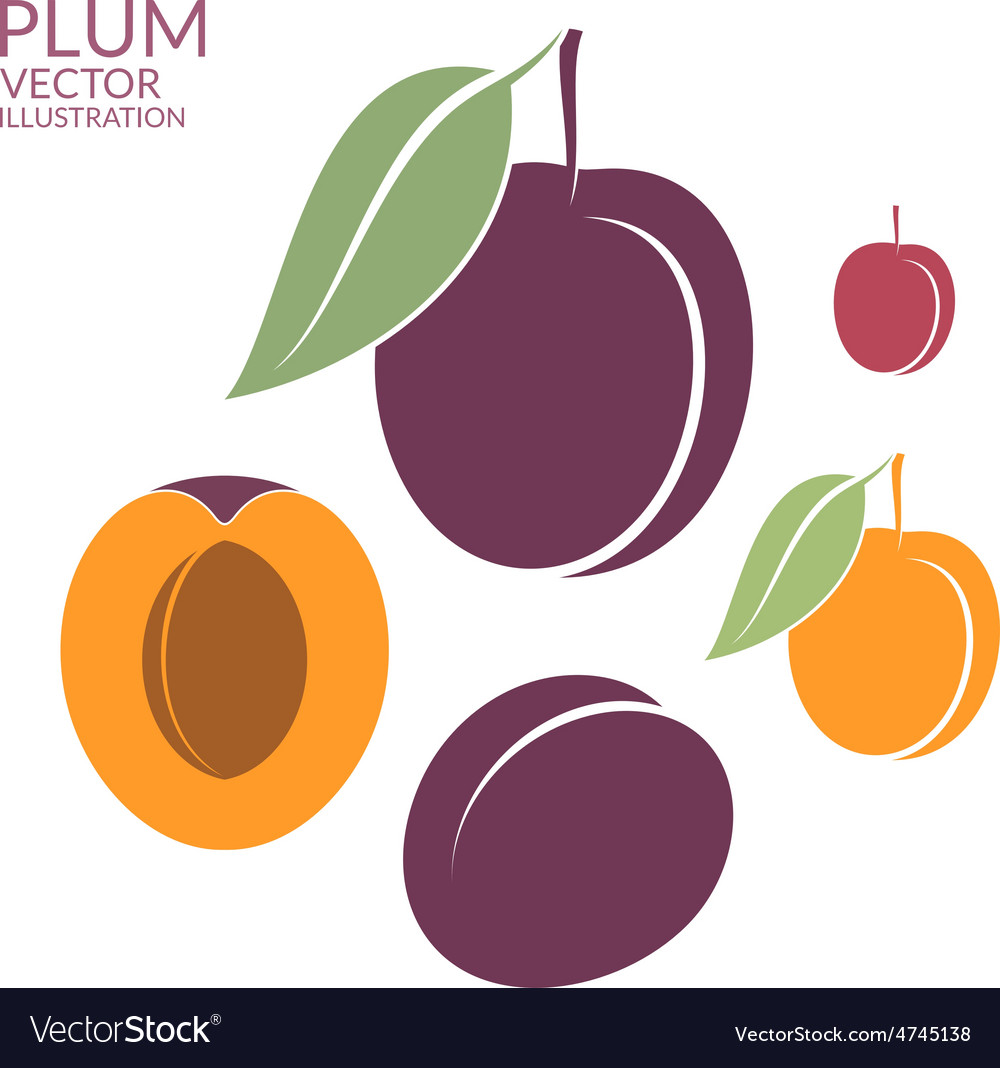Plum set vector