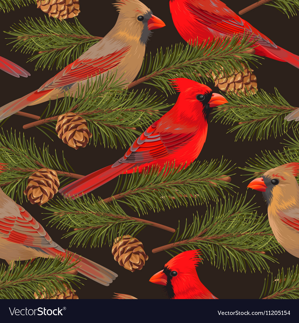 Seamless cardinal and spruce vector