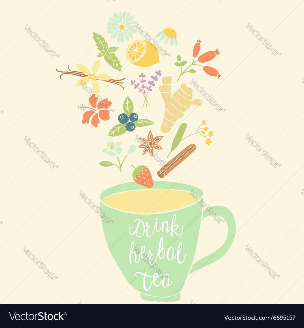 Herbal tea vector