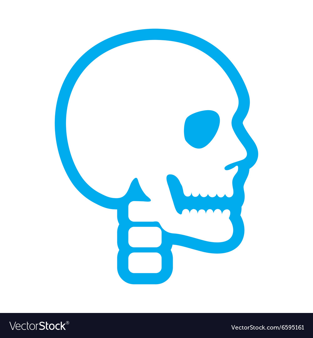 Flat icon on white background human skull vector