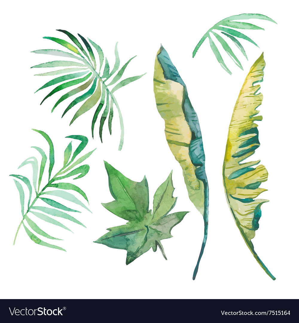Watercolor palm leaves banana leavespapaya vector