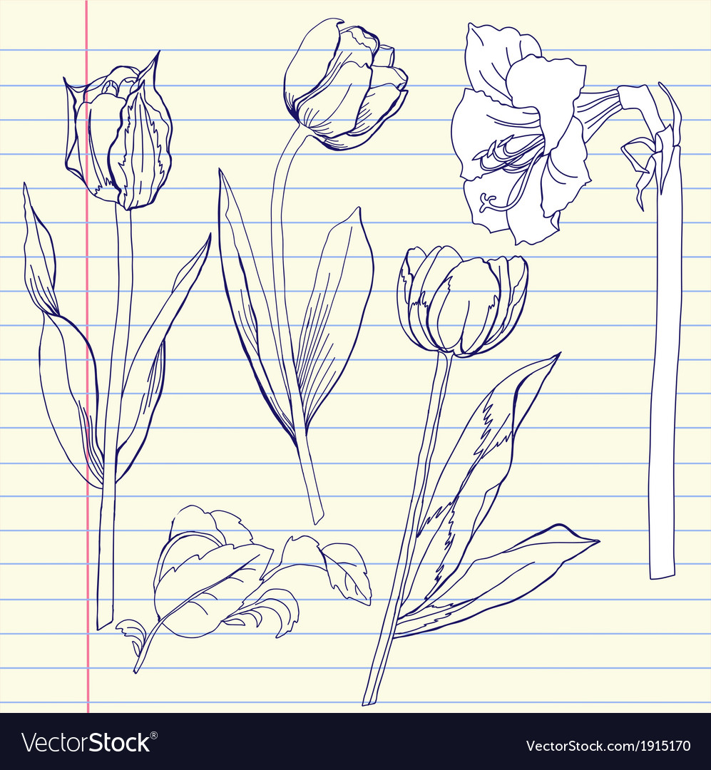 Notebook set with tulip and amaryllis vector