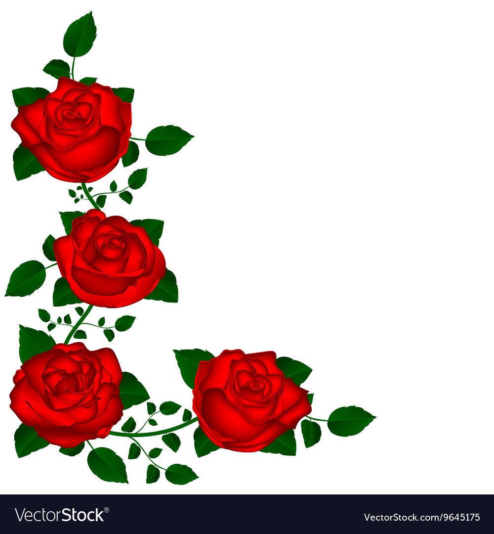 Vine of red roses vector