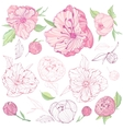 Set of isolated Peony Flowers vector image