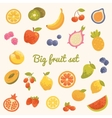 Big colorful summer set of fruits in vector image