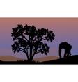 Silhouette of gorilla walking vector image