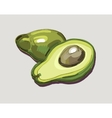 Fresh Avocado vector image