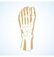Flat design of foot and skeleton vector image