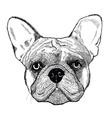 French bulldog dog vector image