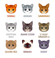 Cute cat icons set iv vector