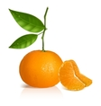 Fresh tangerine with green leaves and slices vector image