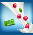 ripe red cranberry falling in milk milk splash vector image