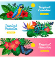 tropical horizontal banner set vector image