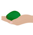 avocado in a hand vector image