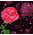 Greeting or invitation card with rose vector image