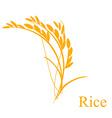 Rice ears vector image