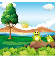 Two frogs above the rock near the river vector image vector image