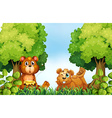Bears and forest vector image vector image