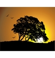 Big tree silhouette on sunset background vector image
