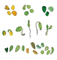 Set with different seeds vector image