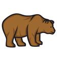 wild bear vector image vector image
