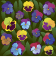 Colored pansy flowers on background of leaves vector image