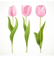 Three pink flowers tulips isolated on a vector image