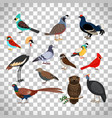 cute birds set on transparent background vector image