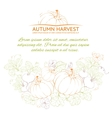 Pumpkins Autumn harvest vector image