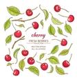cherry set vector image