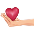 Hand holding a red heart isolated over white vector image vector image