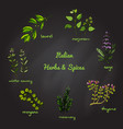 italian herbs and spices vector image