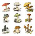 mushroom set hand drawn engraved vintage organic vector image