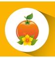 orange fruit palm leaf design vector image