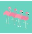 Pink flamingo set Exotic tropical bird Zoo vector image