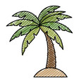 tropical palm icon vector image