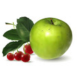 Fruit green apple and cherry vector image